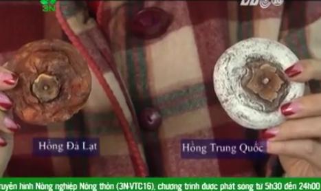 Cách phân biệt Hồng dẻo Đà Lạt và Trung Quốc