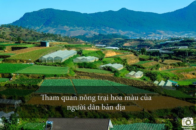 nhung-trai-nghiem-khong-the-bo-qua-dip-304-tai-da-lat-4