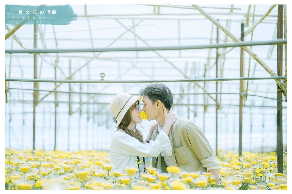 Vườn hoa cúc đẹp ngẩn ngơ tại Đà Lạt
